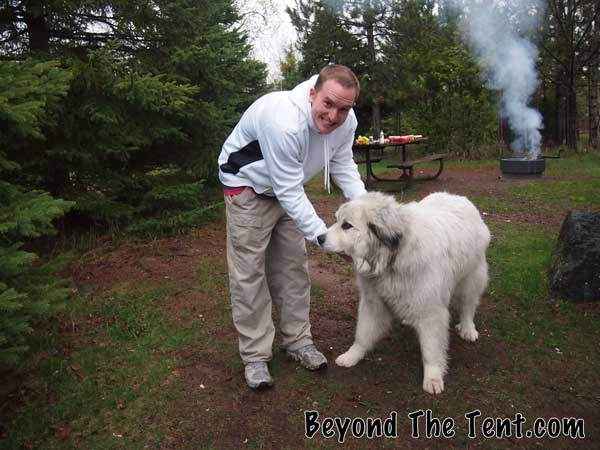 huge dog at the campground