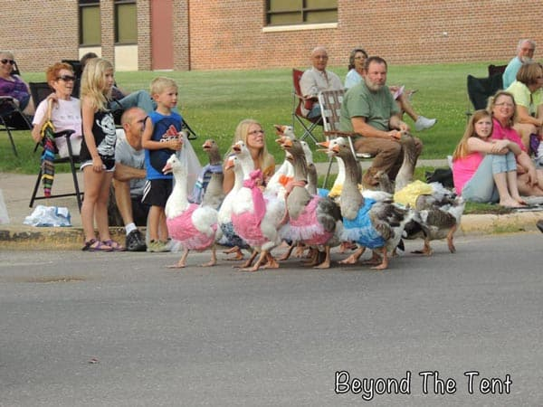 The Geese Were So Cool!