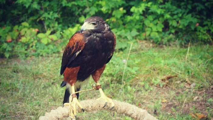 hawk-class-state-park-for-kids-camping-wi-mn-blog.jpg