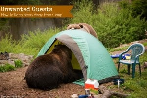 How To Keep Bears Away From Camp