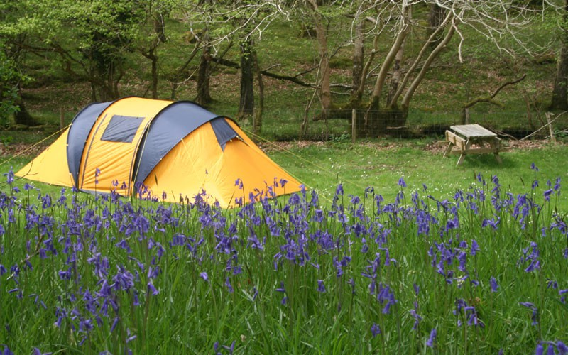 Camping with flowers