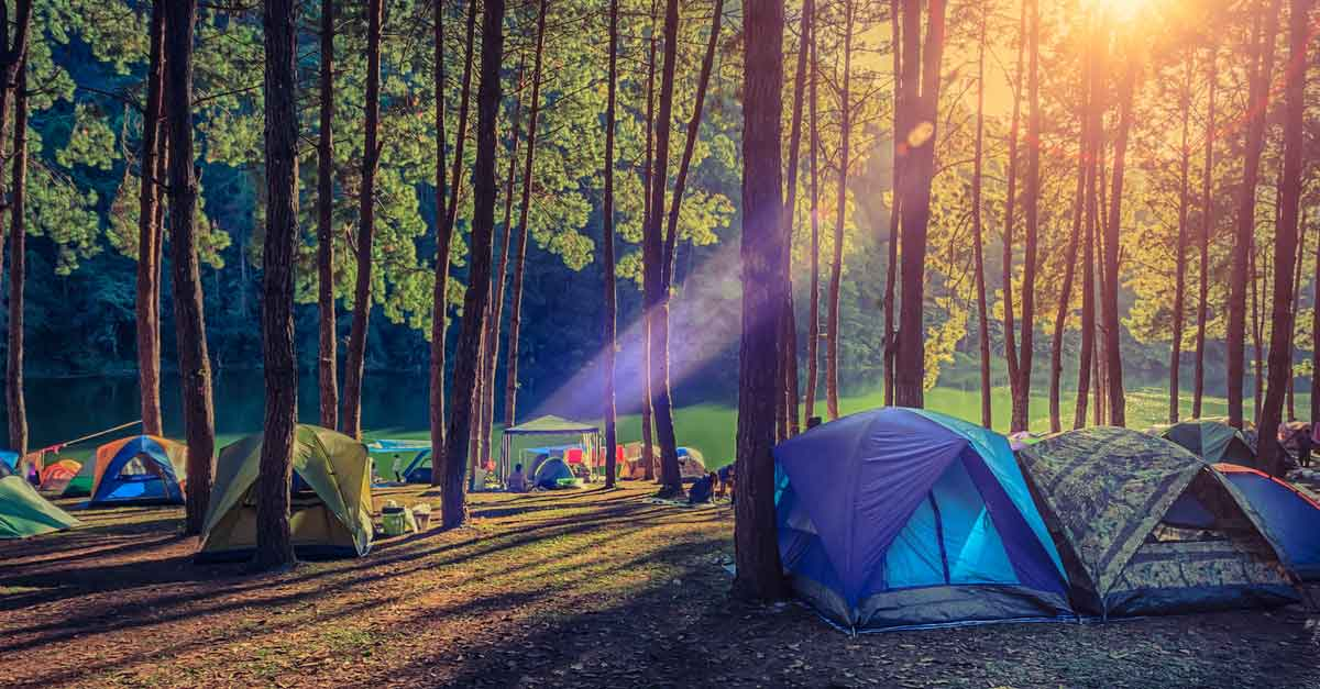Tents-in-a-forest