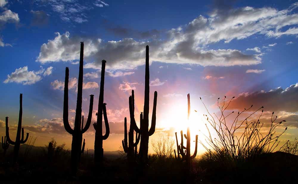 Camping In Arizona: 40 of the Best Campgrounds You Need To Visit 13