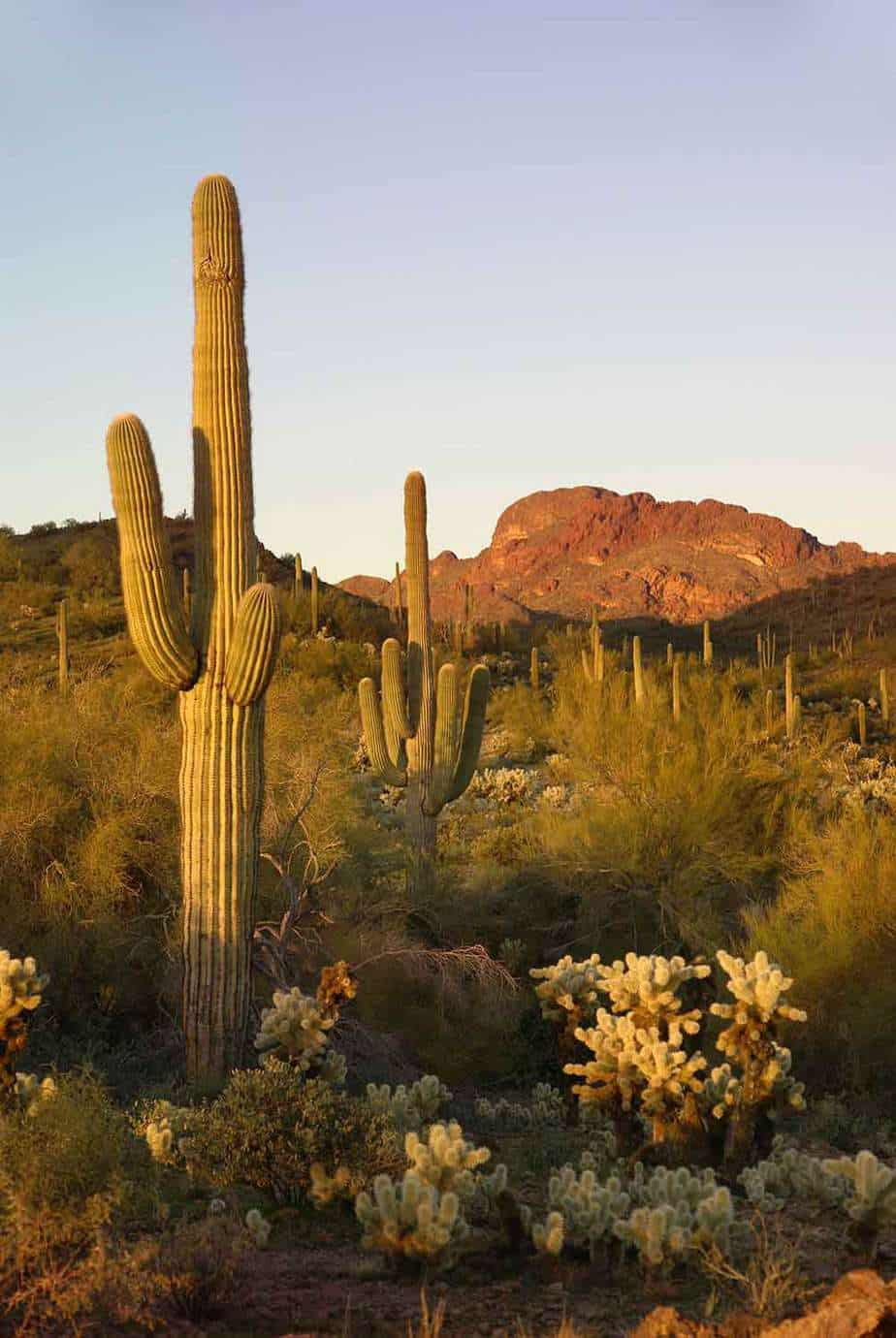 Camping In Arizona: 40 of the Best Campgrounds You Need To Visit 4
