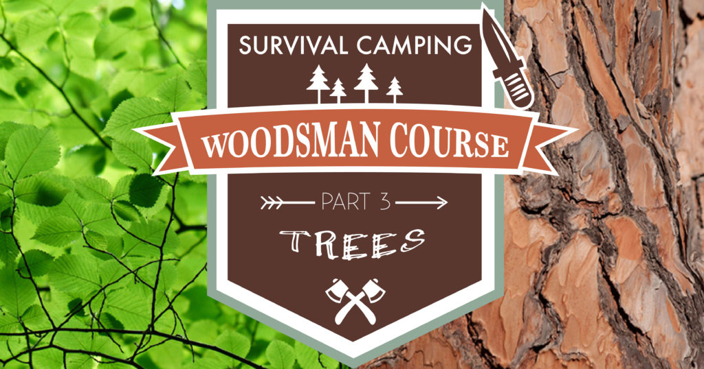 Survival Camping Woodsman Course: Identifying Useful Trees 2