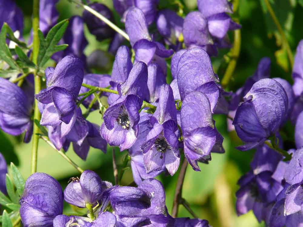 Poisonous Plants You Need to Know About 8