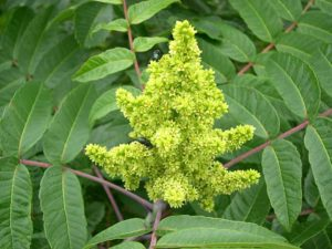 Poisonous Plants You Need to Know About 3