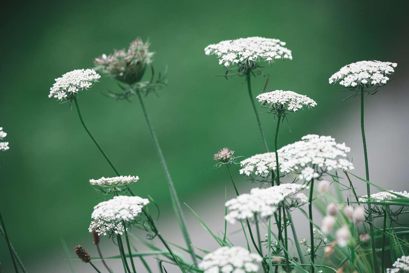 Poisonous Plants You Need to Know About 5