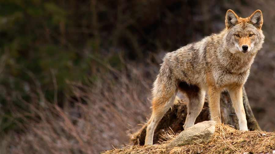 Coyote Cove