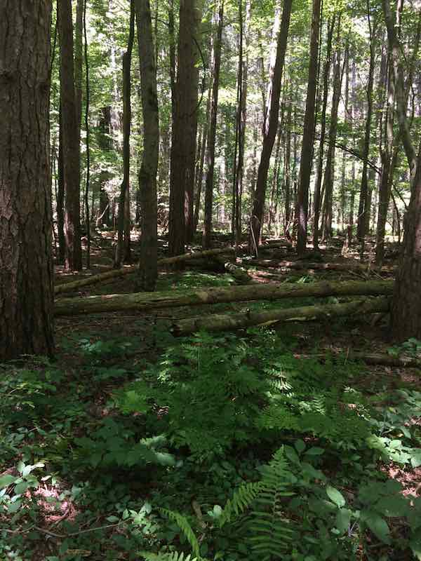 Fernwood State Forest