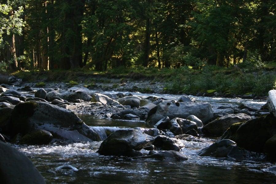 Quinault River Rocks