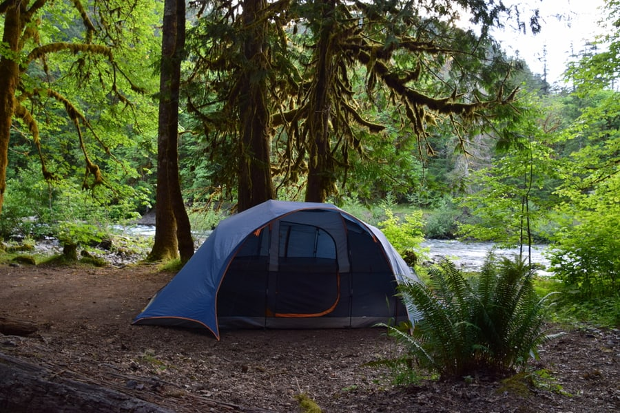 Tent in Olympic Rainforest