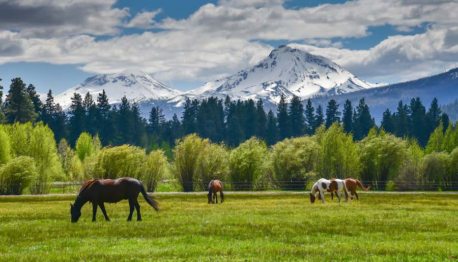 Horses in front of the beautiful mountains of North Sister and Middle Sister, part of the Cascade Mountain Range that runs through Oregon.
