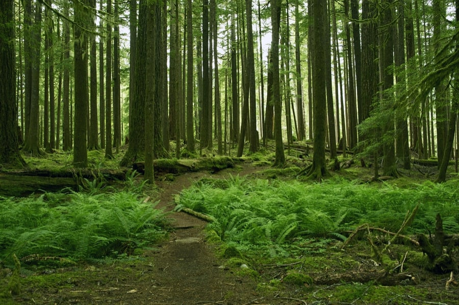 33+ of the Best Hikes in Washington 26