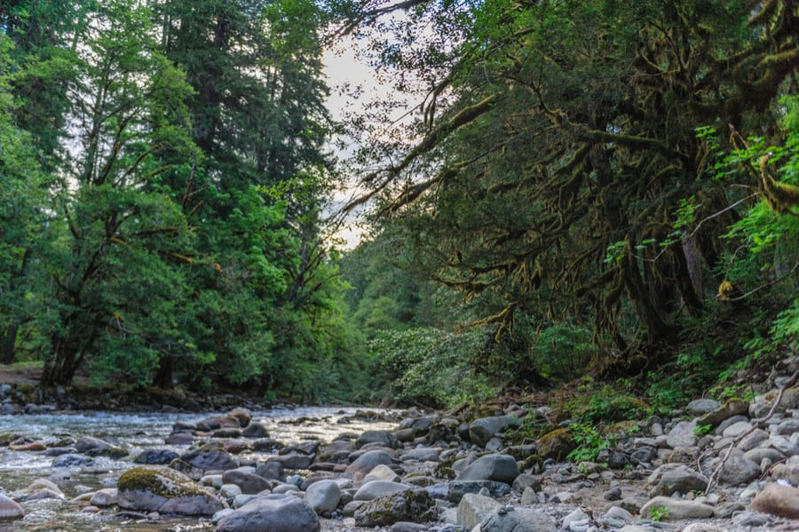 The Complete Guide to Camping in Mount Rainier National Park 16