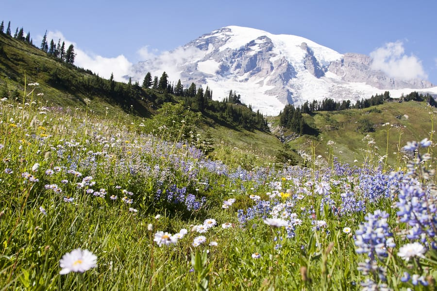 The Complete Guide to Camping in Mount Rainier National Park 52