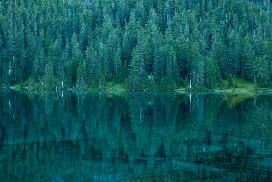 The Complete Guide to Camping in Mount Rainier National Park 9