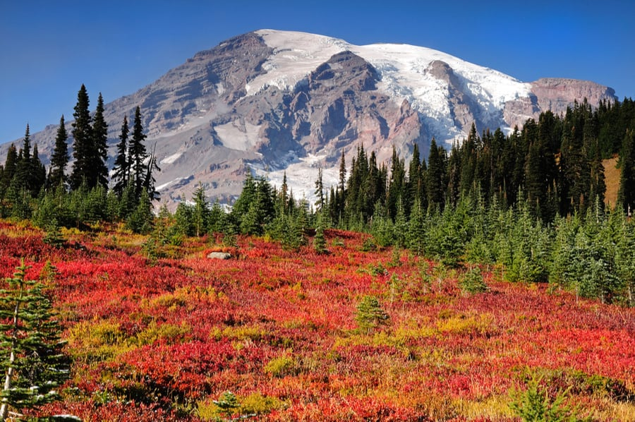 The Complete Guide to Camping in Mount Rainier National Park 33