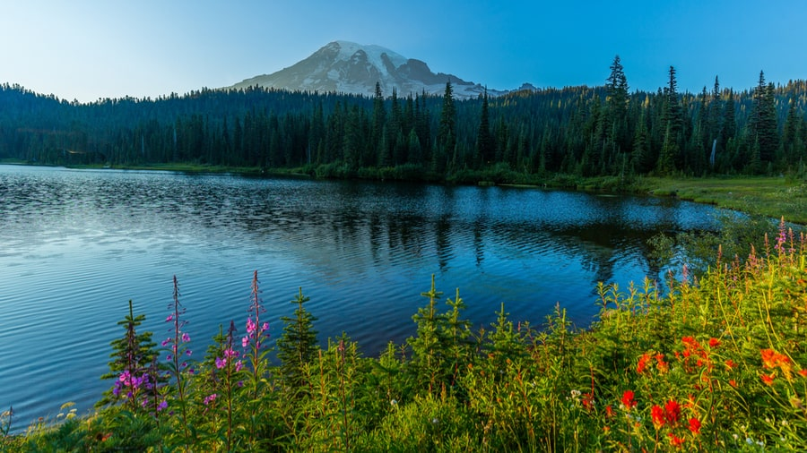 The Complete Guide to Camping in Mount Rainier National Park 34