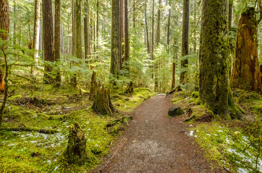 33+ of the Best Hikes in Washington 49