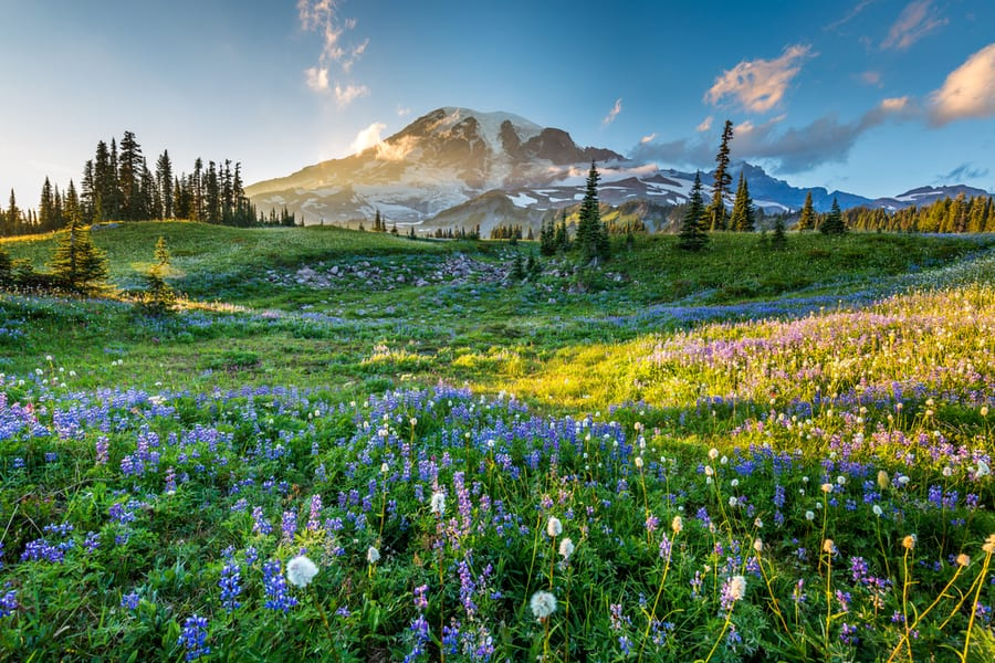 The Complete Guide to Camping in Mount Rainier National Park 2