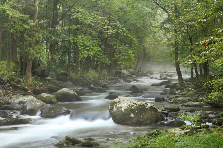 The Complete Guide to Camping in Great Smoky Mountains National Park 13