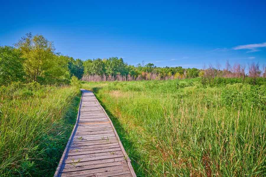 Boardwalk at Pershing State Park