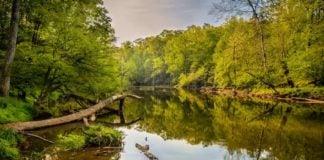 Slow River in North Carolina Wilderness