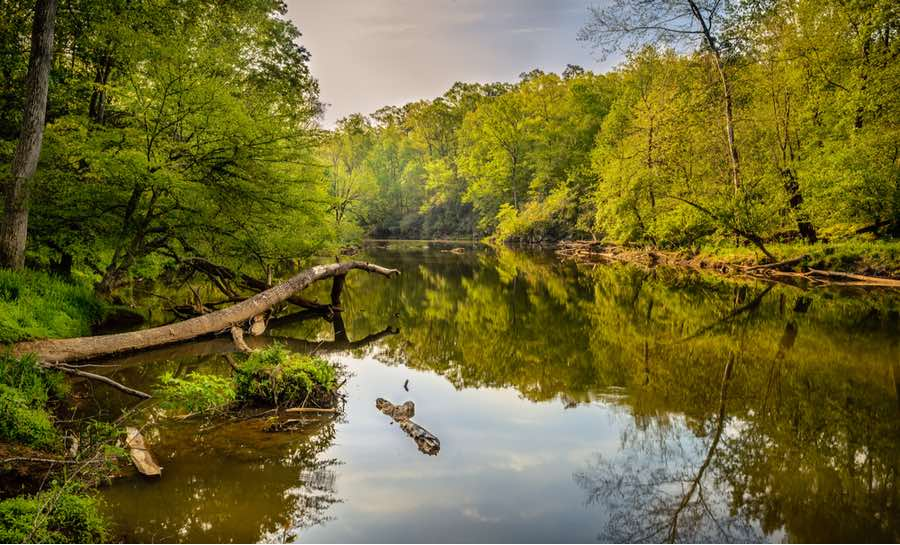 Slow River in North Carolina Wilderness