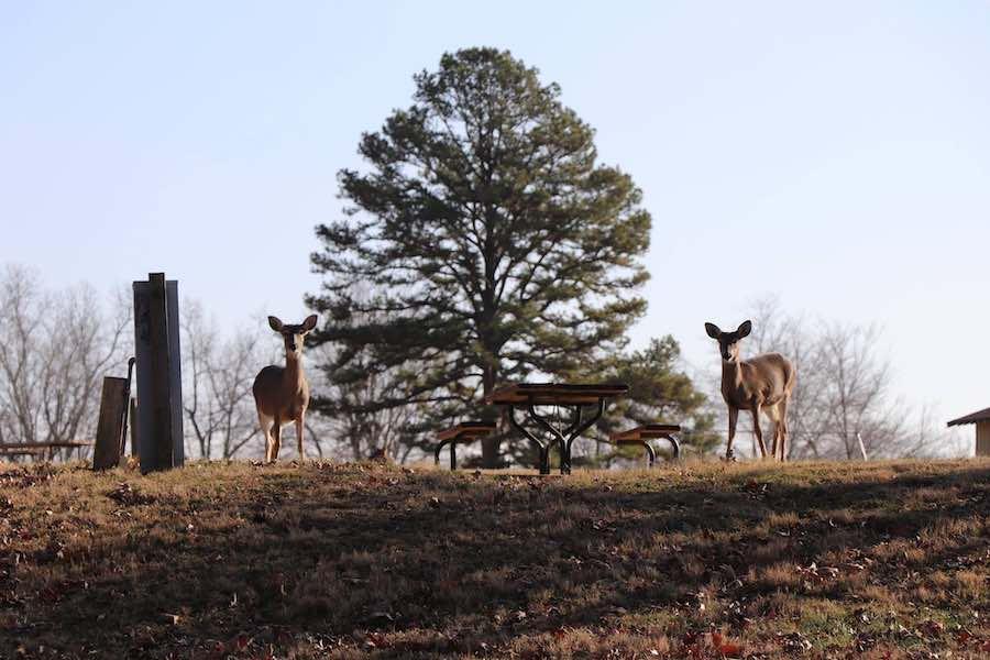 Deer at Cloud 9 Ranch