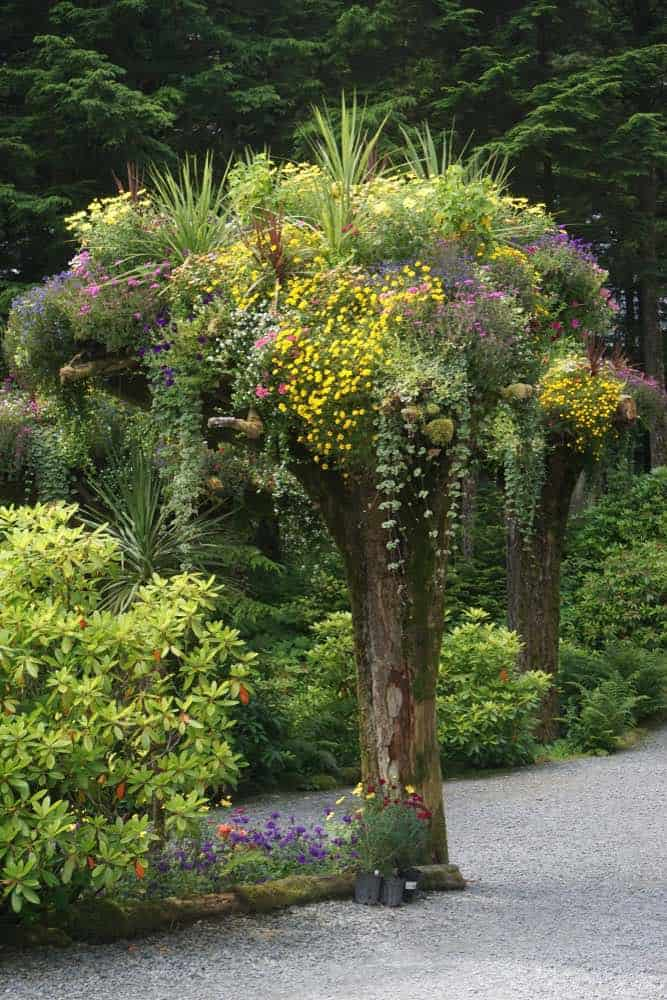 Glacier Gardens is a rain forest botanical garden in the Tongass National Forest. Upside-down tree trunks serve as planters for a wide variety of colorful flowers.