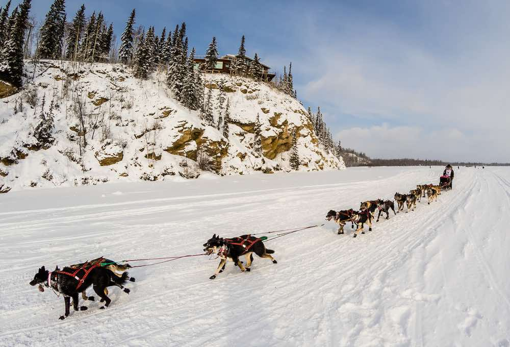 A musher races down the Tanana River during the opening hour of the Iditarod dogsled race