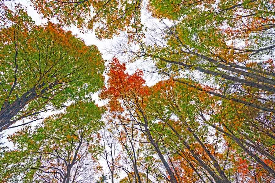 fall colors at Mark Twain State Park - Camping