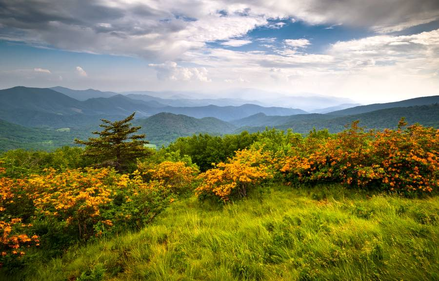 Roan Mountain State Park in Tennessee