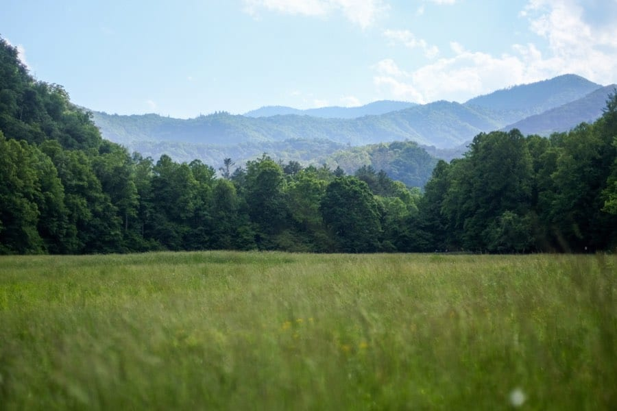 Grassy Meadow Near Cataloochee Campground in GSMNP
