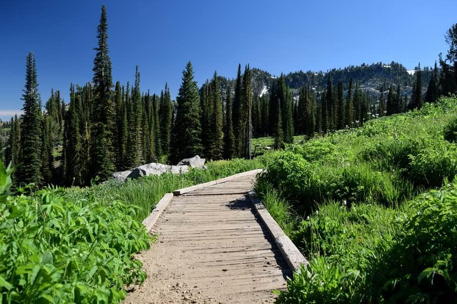 Boardwalk through Wilderness Near Cascade Idaho