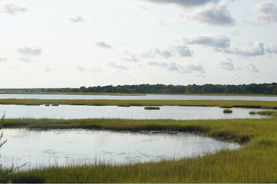 Marsh at Waquoit Bay in Massachusetts