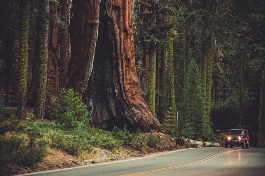 Generals Highway in Sequoia National Park