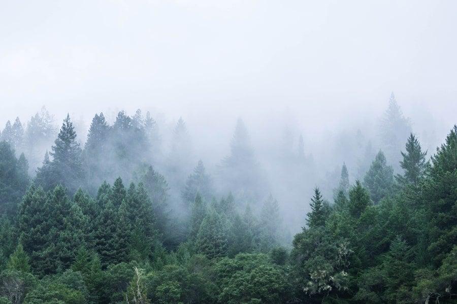 Misty Forest in Mendocino