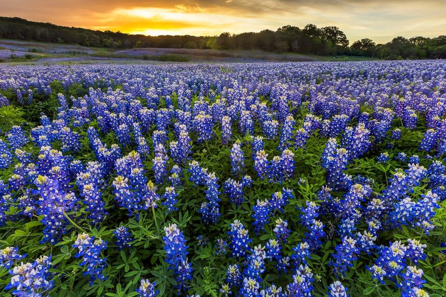 Spicewood Texas Flowers in Bloom