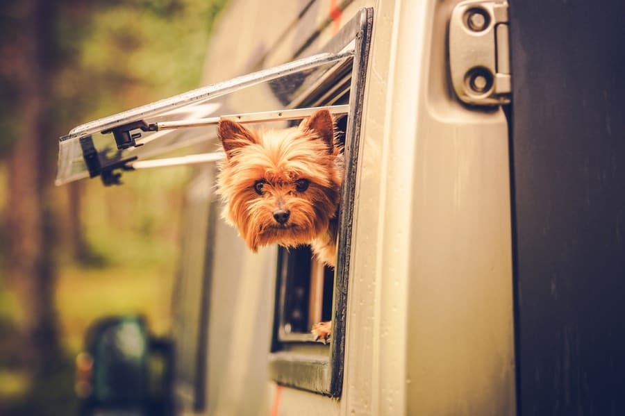 Dog in RV at RV Park
