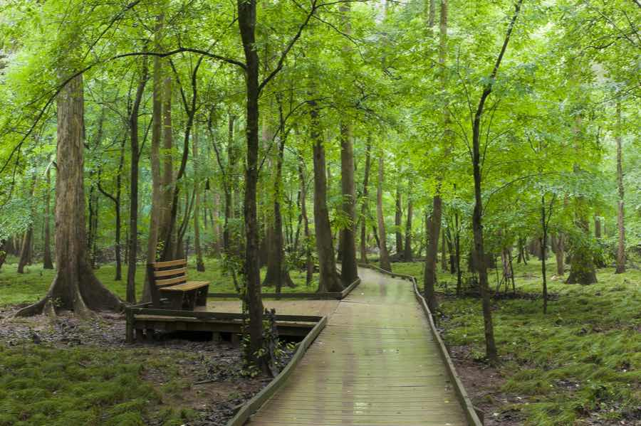 Bench on Boardwalk in Congaree National Park