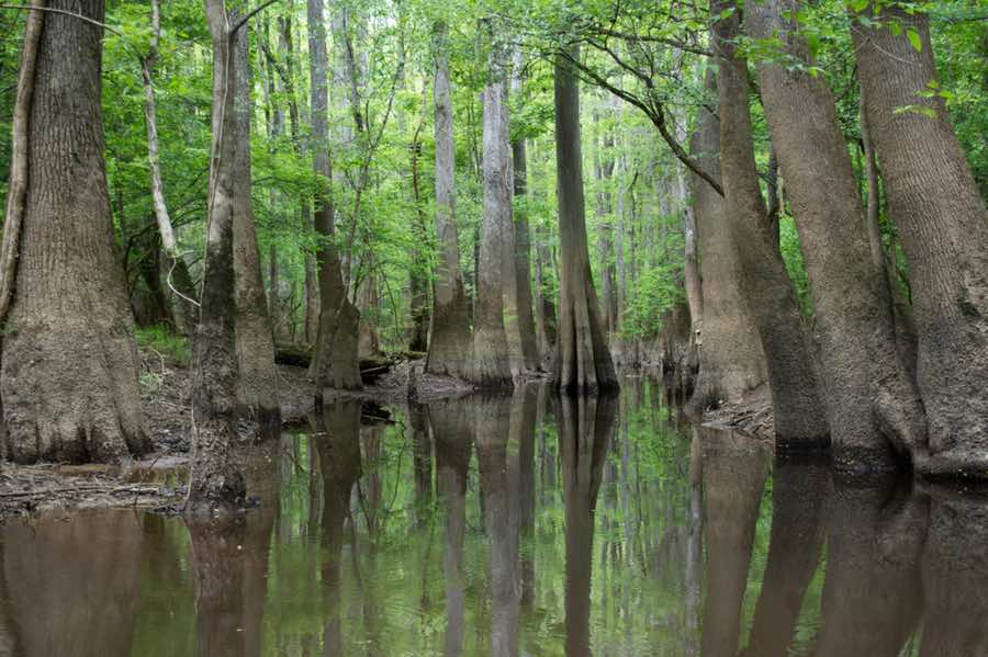 Wetland in Congaree National Park