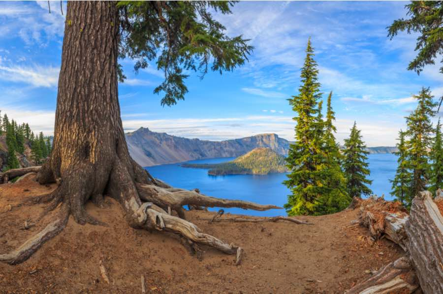 View of Crater Lake Near Gnarled Tree
