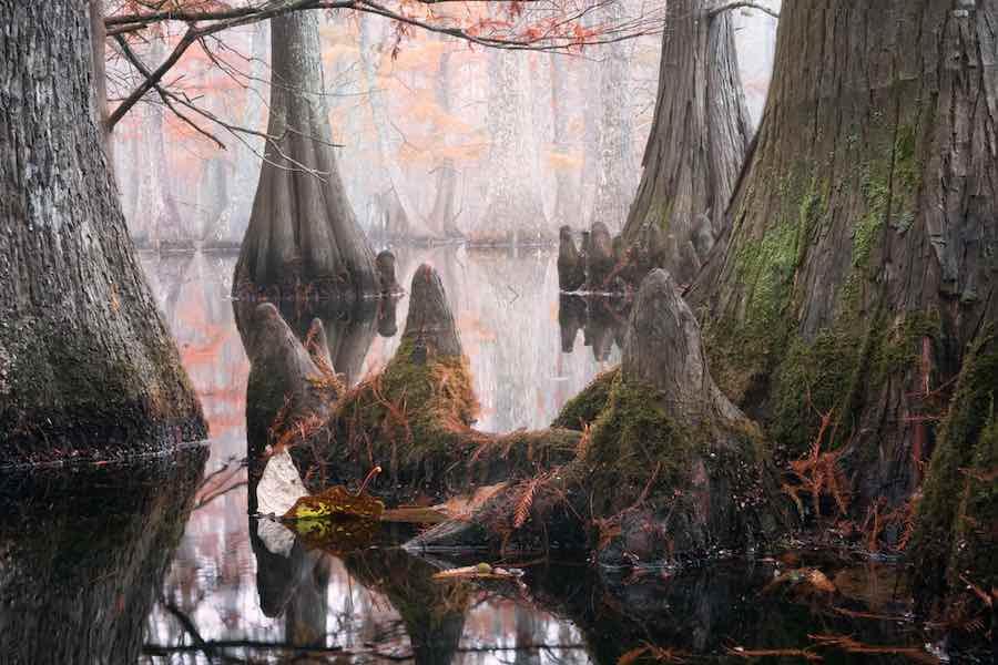 Chicot State Park, Louisiana