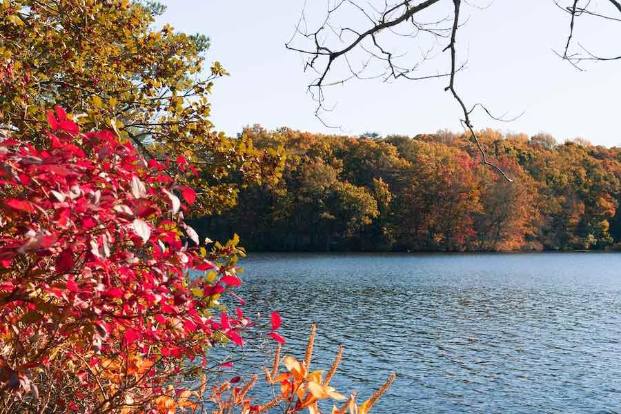 Camping in Delaware: Killens Pond State Park
